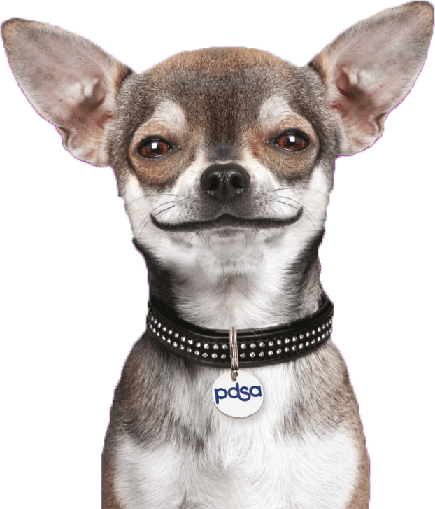 PDSA Dog